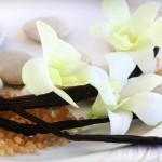 Все о ванили. ч.2 Тайна ванильной орхидеи