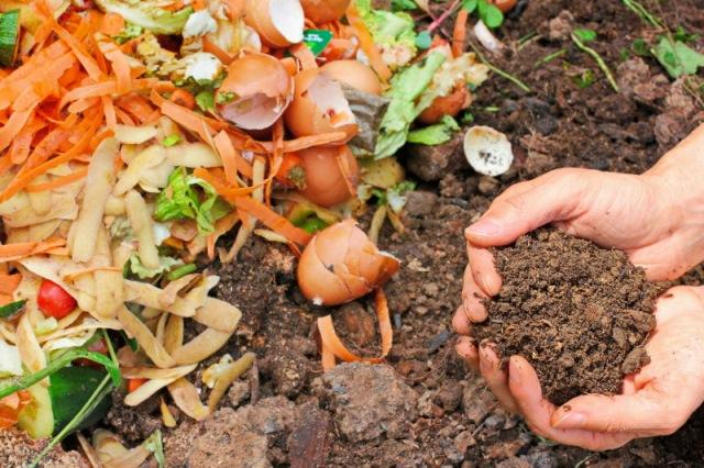 компост из пищевых отходов, фото