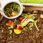 Пищевые отходы — отличное удобрение для огорода и комнатных цветов