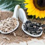 Подсолнечник — калорийность, пищевая ценность и интересные факты