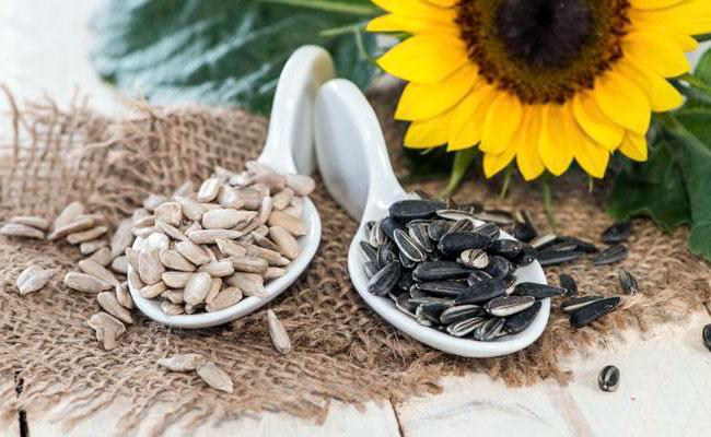 Подсолнечник - калорийность, пищевая ценность и интересные факты